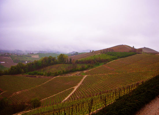Langhe: What is there to do?