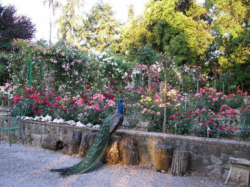 Top 5 Rose Gardens in Italy
